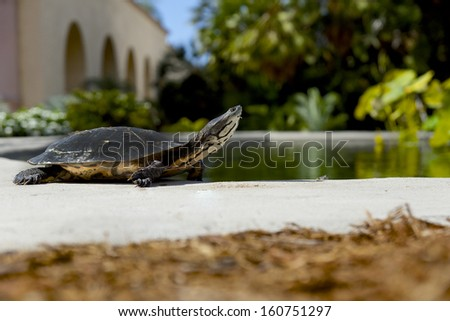 Turtle at the park - stock photo
