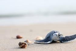 Turtle balls on the beach