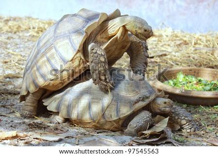 Turtle breeding in the zoo