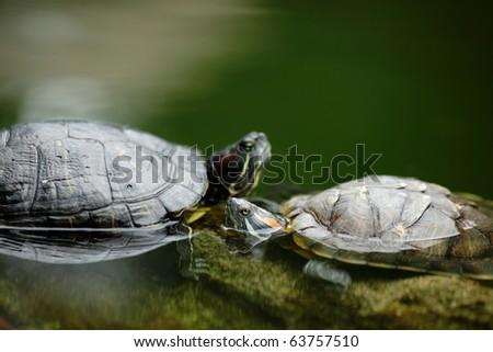 turtle chatting