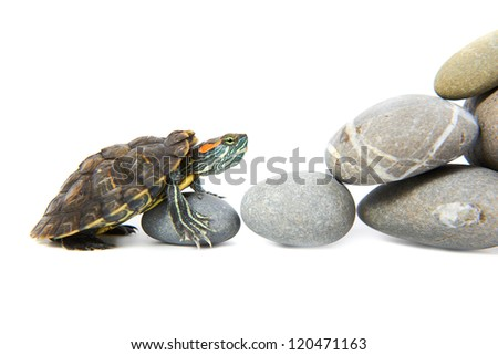 Turtle climbing up the steps. Concept isolated on white background