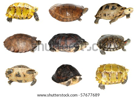 turtle collection isolated in white background