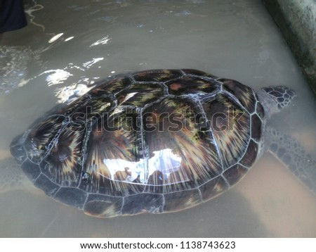 Turtle conservation in Bali #1138743623