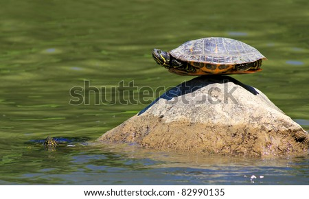 turtle doing yoga finding the ultimate sense of balance on the rock and the other one is watching