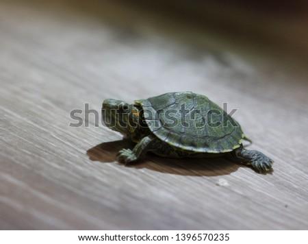 turtle green turtle small turtle little turtle nature
