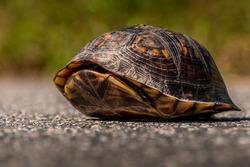 Turtle hiding inside it's shell
