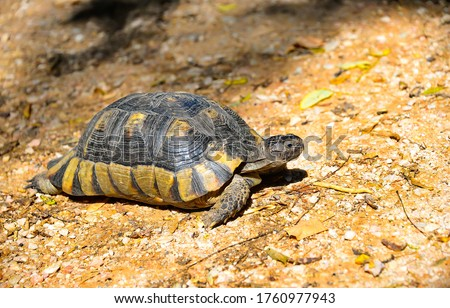 Turtle in nature. Turtle close view