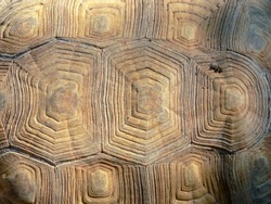 Turtle in sunlight close-up, tortoise shell texture