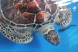 Turtle infirmary in Bora Bora