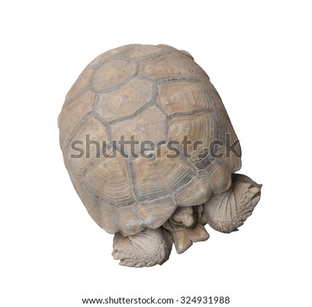 Turtle isolated on white #324931988