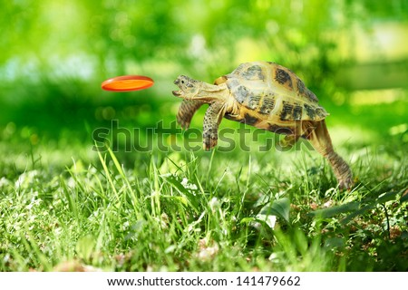 stock photo turtle jumps and catches the frisbee 141479662 - Каталог — Фотообои «Животные»