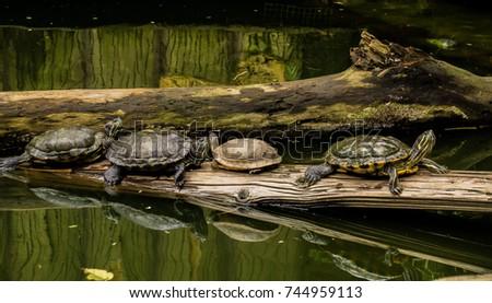 turtle line #744959113