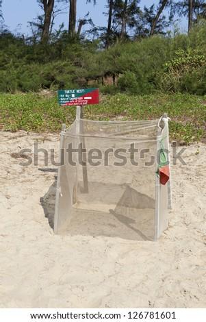 Turtle nesting site , Galgibaga Beach South Goa - India