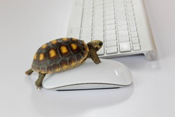 turtle on computer with keyboard and wireless mouse, slow internet, slow processor