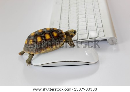 Photo of  turtle on computer with keyboard and wireless mouse, slow internet, slow processor