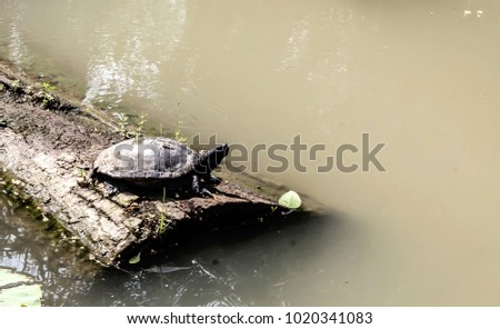 Turtle on riverbank on the timber. #1020341083