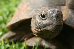 turtle, portrait
