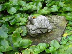 Turtle sculpture in the garden with water lilies