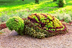 Turtle shaped bush in the garden. Ornamental park garden design