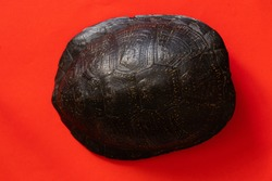 turtle shell on an isolated background