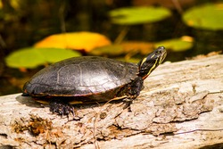 turtle soaking up the sun on a log