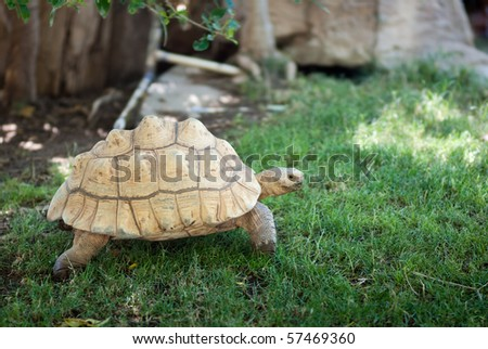Turtle - the Race is On