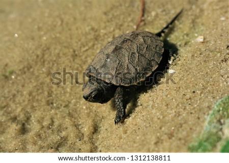 Turtle, turtle, turtle!
