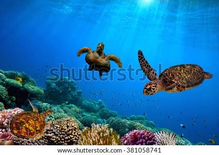 Turtle underwater Foto stock ©