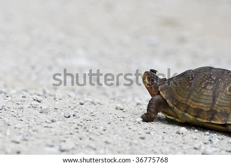 turtle with fly on nose