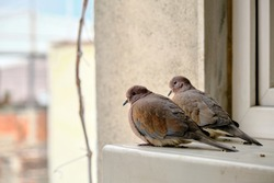 turtledove and pigeons on metal platform standing together