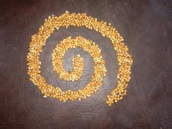 turtledove bird food grain circle