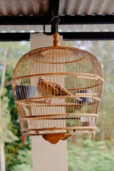 turtledoves (Spilopelia chinensisare) perched in a cage