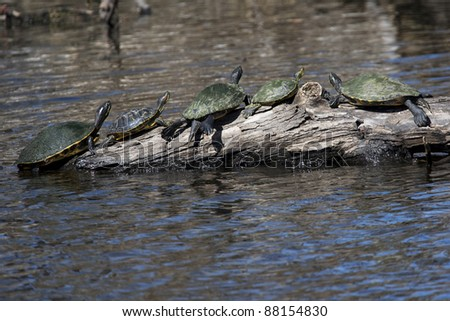 Turtles in a New Orleans bayou