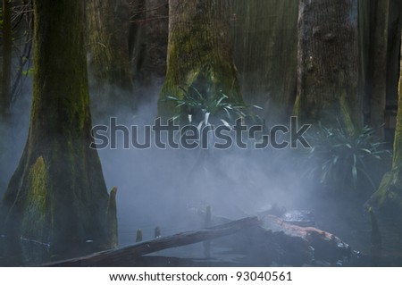 Turtles in Foggy misty morning in exotic swamps