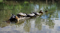 Turtles in the wather