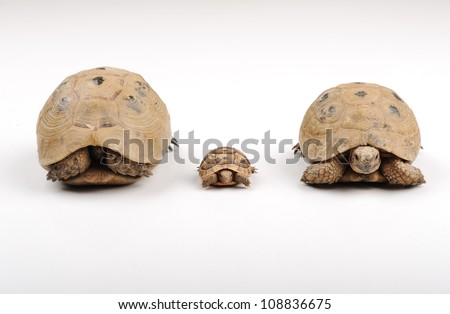 Turtles on a white backround