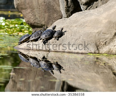 Turtles  - Racing to the top