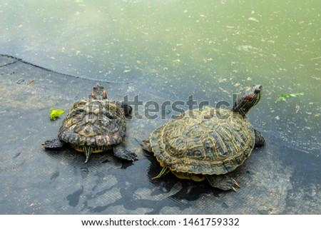 Turtles, Turtles on the the road, Beautiful turtles
