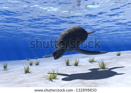 Turtles under water on a blue background.