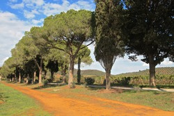 Tuscan vineyard in Maremma area