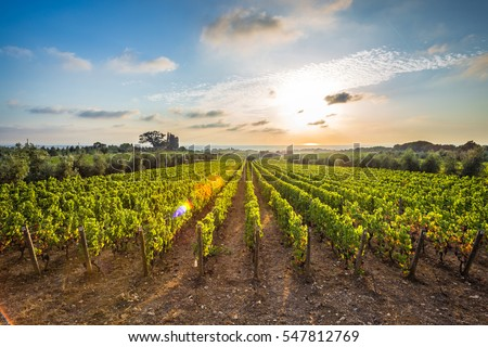 Tuscan vineyards\nThe sunset on the vineyards of the Bolgheri wine.