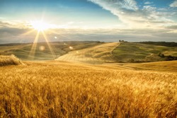 Tuscany,fields of gold