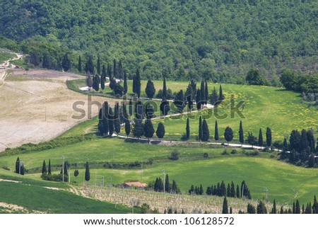Tuscany landscape made of Cypress trees and rising bend road