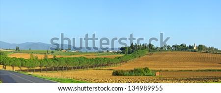 Tuscany landscape panorama with vineyard, Chianti region, Italy - stock photo