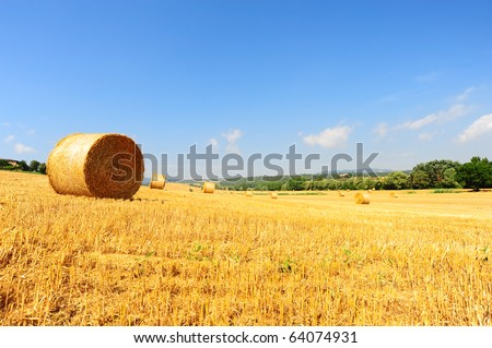 Tuscany Landscape With Many Hay Bales In The Morning