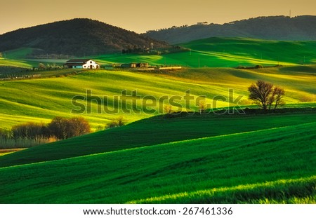 Tuscany, rolling hills on sunset. Volterra rural landscape. Green fields, farmland and trees. Italy