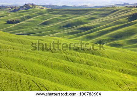 Tuscany, undulating terrain in Crete Senesi country landscape, Italy, Europe. Rolling Hills, green fields with sunlight on sunset and a farm with cypresses trees. #100788604