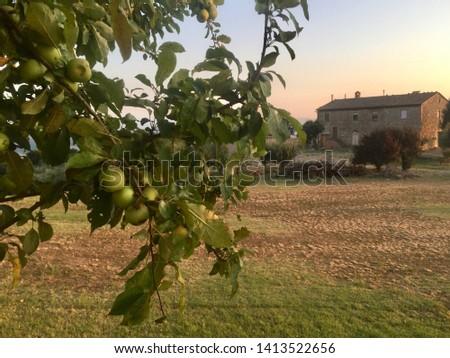 Tuscany where dreams come true #1413522656