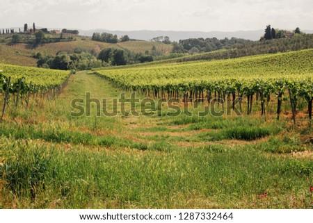 Tuscany wine hills #1287332464