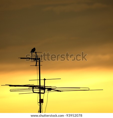 TV antenna with a bird on a pole at the morning light